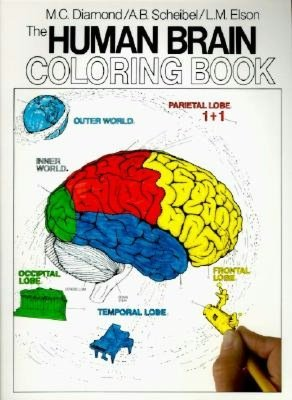 Human Brain Coloring Book Pdf Free