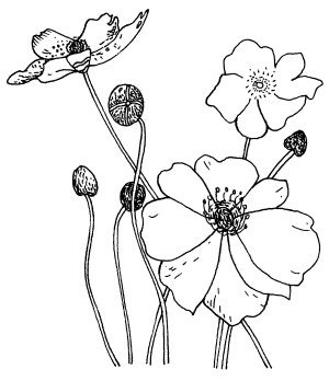 Penny Black Rubber Stamp 2.25X2.75 Poppies by Penny