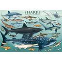 Sharks 1000 piece Jigsaw Puzzle by Eurographics: Product Image