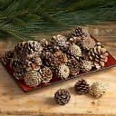 Gold-Tipped Pinecones by K&K Interiors: Product Image