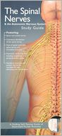 download Anatomical Chart Company's Illustrated Pocket Anatomy : Spinal Nerves and the Autonomic Nervous System Study Guide book