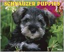 2014 Schnauzer Puppies Wall Calendar by Willow Creek Press, Incorporated: Calendar Cover