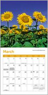 2015 Mini Sunflowers Calendar by Ziga Media: Calendar Cover
