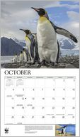 2015 Penguins WWF Wall Calendar by Calendar Ink: Calendar Cover