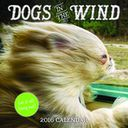 2016 Dogs in the Wind Wall Calendar by Sourcebooks: Calendar Cover