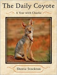 The Daily Coyote by Shreve Stockton: Book Cover