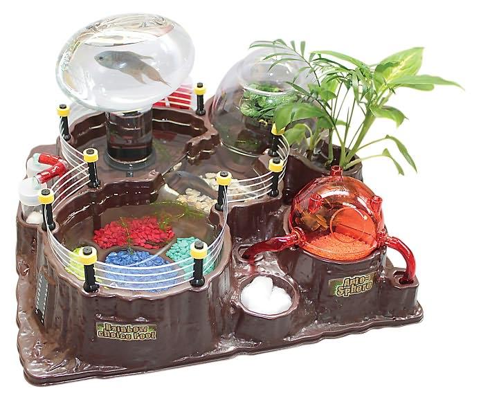 Betta fish tanks cool unique betta fish tanks cool betta for Best betta fish tank