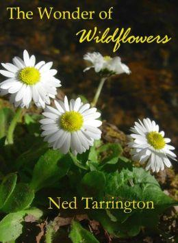 The Wonder of Wildflowers