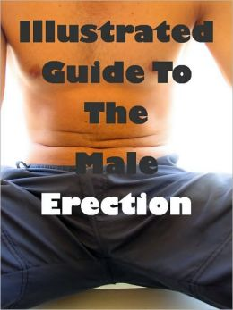 Illustrated Guide To The Male Erection