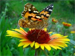 Butterfly Gardening For Beginners
