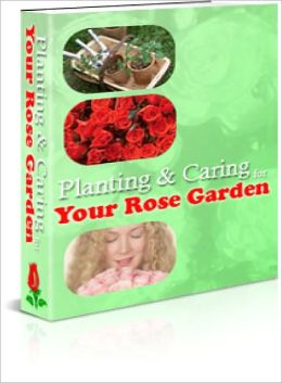 Planting and Caring for Your Rose Garden