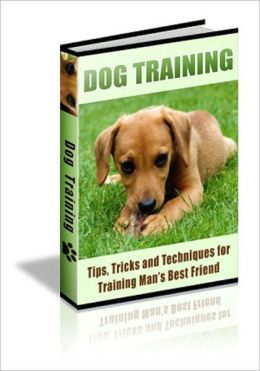 90 Dog Training Tips