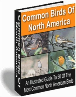 Common Birds of North America - All Illustrated Guide to 50 Of the Most Common North American Birds