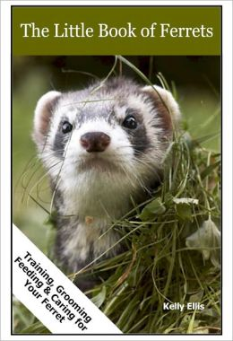 Ferrets (Training, Grooming, Feeding & Caring for Your Ferret)