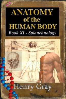 Anatomy of the Human Body - Book XI Splanchnology