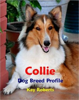 Collie Dog Breed Profile