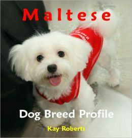 Maltese Dog Breed Profile