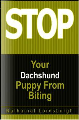 Keep Your Dachshund From Biting