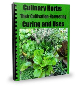 CULINARY HERBS Their Cultivation, Harvesting, Curing and Uses