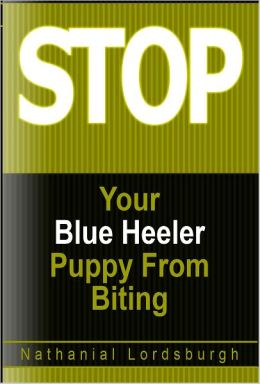 Keep Your Blue Heeler From Biting