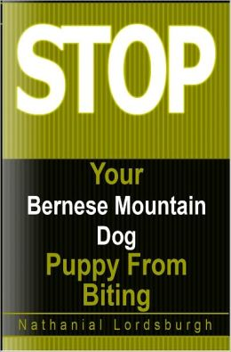 Keep Your Bernese Mountain Dog From Biting