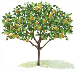 Growing and Maintaining Healthy Fruit Trees: A Beginner's Guide To Growing Beautiful and Healthy Fruit Trees