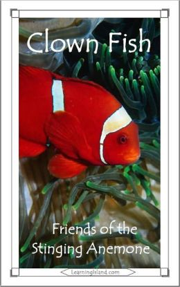 Clown Fish: Friends of the Stinging Anemone