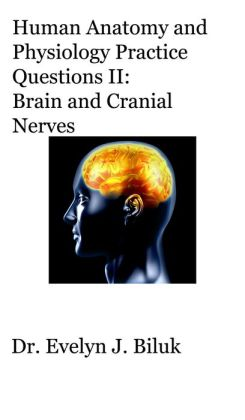 Human Anatomy and Physiology Practice Questions II: Brain and Cranial Nerves
