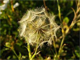 Simple Secrets Ways to Reduce Allergies Greatly