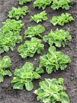 How to Grow a Healthy Organic Garden: The Secret in Organic Composting