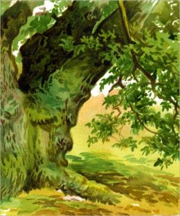 TREES: HOW TO PAINT THEM IN WATERCOLOURS