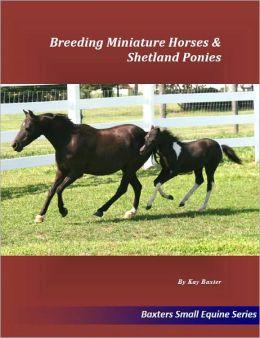 Breeding Miniature Horses & Shetland Ponies