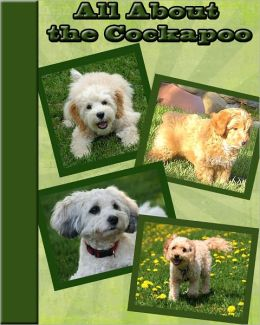 All About the Cockapoo