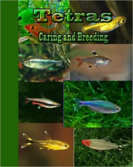 Tetras: Caring and Breeding