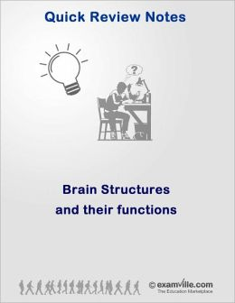 Anatomy Quick Review: Brain Structures and Their Functions