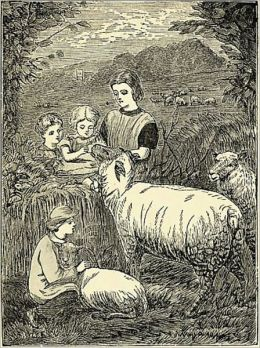 The Sheep and Lamb.