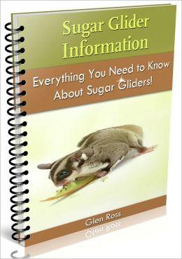 Sugar Glider Information