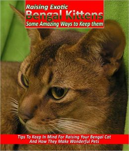 Raising Exotic Bengal Kittens Get Some Really Excellent Tips To Raise Bengal Cats