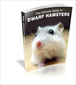 Raising A Healthy Dwarf Hamster: The Definitive Guide
