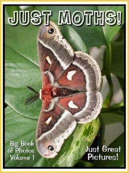 Just Moth Photos! Big Book of Photographs & Pictures of Moths, Vol. 1