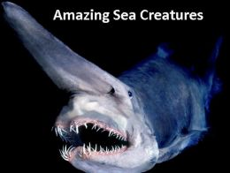 Amazing Sea Creatures Photography