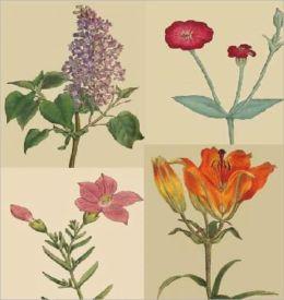 The Botanical Magazine - Illustrated