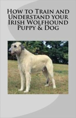 How to Train and Understand your Irish Wolfhound Puppy & Dog