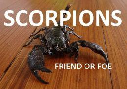 SCORPIONS FRIEND OR FOE?