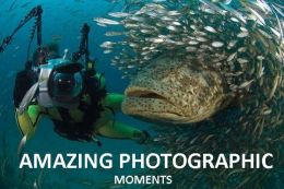Amazing Photographic Moments