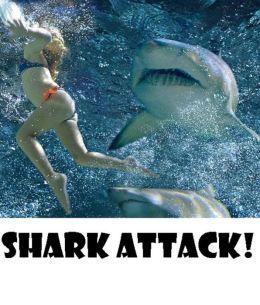 Shark Attack! ( nature, behaviour, behavior, habit, temperament, mould, nature, world, behavior, conduct, nature, custom, behaviour )
