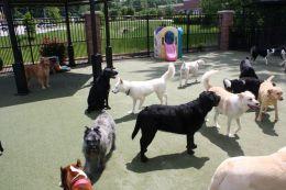 Dog Boarding Kennel Start Up Sample Business Plan!