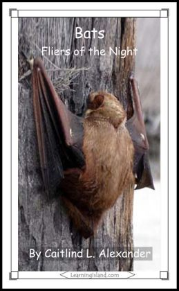Bats: Fliers of the Night