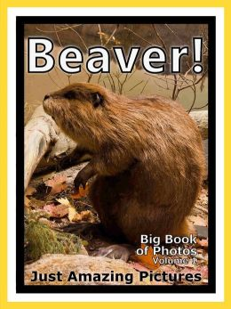 Just Beaver Photos! Big Book of Photographs & Pictures of Beavers, Vol. 1