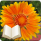 Santa Cruz Flowers + Bible Moving Wallpaper